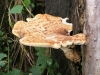 Dryad\'s Saddle Nov 09 pic by D Falkner