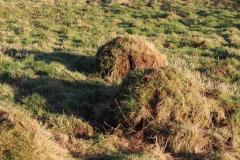 Anthills in meadow 3 (1) Jan 2018