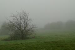 Mist Nov 2015