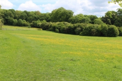 Meadow 2 May 2017