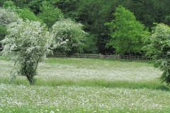Meadow 3 May 2016