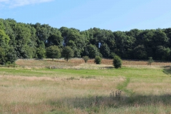 Meadows 2 and 3 Aug 2016