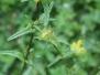 WildflowersInMeadow3