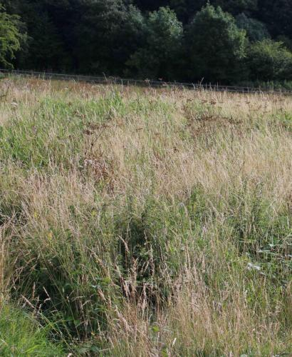 Variety of grasses